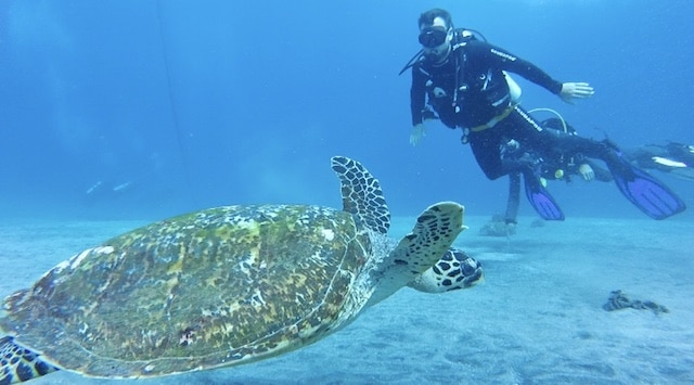 Scuba diving with a turtle Crystal Bay Nusa Penida Bali